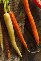 bunte mehrfarbige rohe Karotten