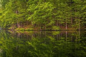 Bäume, die im hübschen Jungenreservoir in Baltimore County, März reflektieren