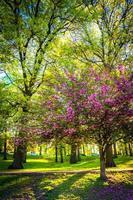 bunte Bäume im Druidenhügelpark, Baltimore, Maryland.