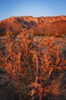 Sonnenuntergang des südwestlichen Wüstengebirgskaktus foto