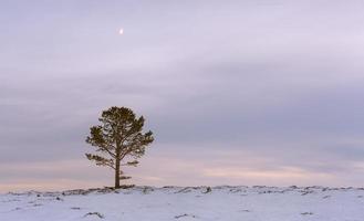 Baum foto
