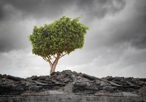 grüner Baum foto