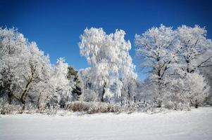 gefrostete Bäume foto