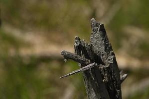 gesteinigter Baum foto