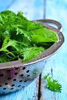 gemischte Salatblätter foto