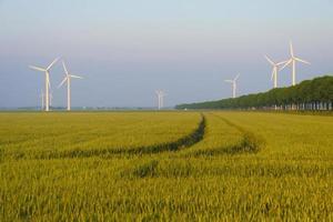 Mais wächst auf einem Feld im Frühjahr foto