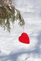 rotes Valentinstagherz, das in der vertikalen Kiefer hängt foto
