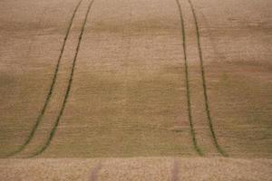 Weizenfeldspuren