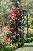 Blumenbogen foto