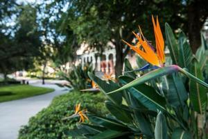 Universität von Tampa Campus foto
