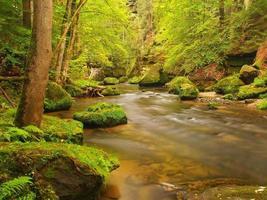 Flussufer unter Bäumen am Gebirgsfluss, moosige Felsbrocken