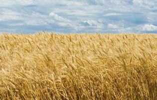 ukrainische Sommerlandschaft foto