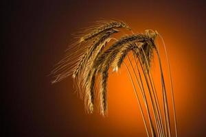 Getreide im Sommer foto