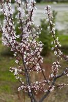 Frühling foto
