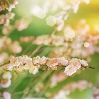 Frühlingsblüte foto
