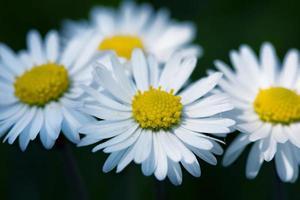 Blumen, Frühling