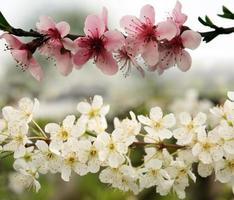 Frühlingsblumen foto
