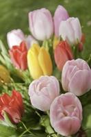 Frühlingsbotschafter
