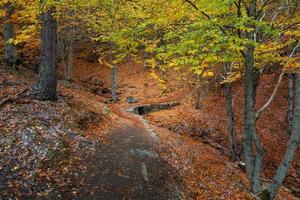 rustikale Fußgängerbrücke im Herbst