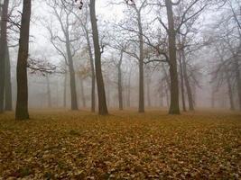 Herbstlandschaft. foto
