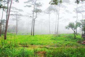 Landschaft des Waldes foto