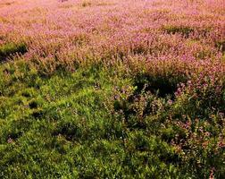 glückseliges Feld, Landschaft