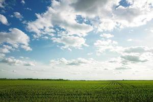 Landschaft und grünes Maisfeld foto