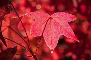 Herbstfeuer foto