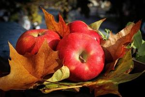 Äpfel fallen foto