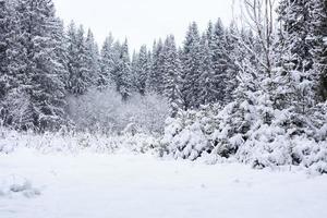 Winterwald foto