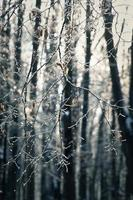 Winterszene