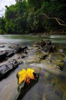 Landschaft eines Flusses in Malaysia foto
