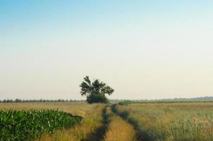 Landschaft mit Landstraße im Sommer foto