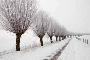 neblige Winterlandschaft in den Niederlanden