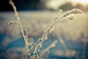 Winterzweig mit Schnee bedeckt