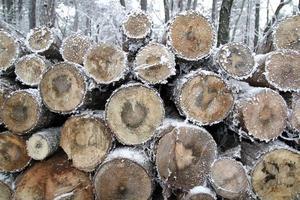 Baumstumpf im Winter.