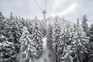schneebedeckter Weg im Winter foto