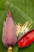 Bananenblüte foto