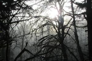 Oregon nebligen Morgen mit Bäumen