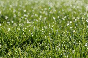 Tau auf dem Gras an einem sonnigen Tag foto