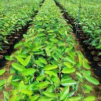 junge Pflanzen foto
