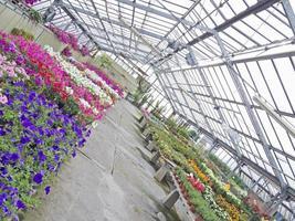 Gewächshaus mit farbigen Blumen Blick aus verschiedenen Blickwinkeln foto