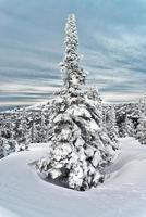 Skigebiet Sheregesh, Region Kemerowo, Russland. foto