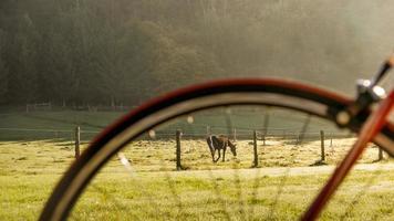 Pferd und Fahrrad foto