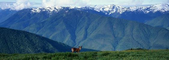Panorama des olympischen Nationalparks foto
