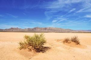 Wüstenbüsche foto