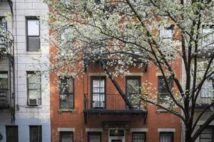 blühender Baum, Wohnhaus, Manhattan, New York City foto
