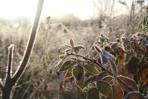 Frost, wenn die Sonne aufgeht