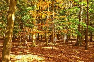 Herbstszene foto