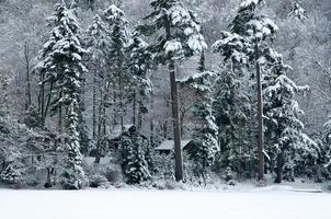 Hütten im Wald foto